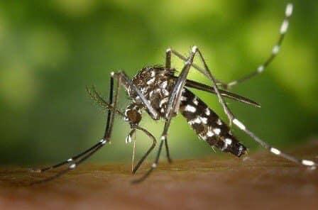 virusi i nilit perendimor